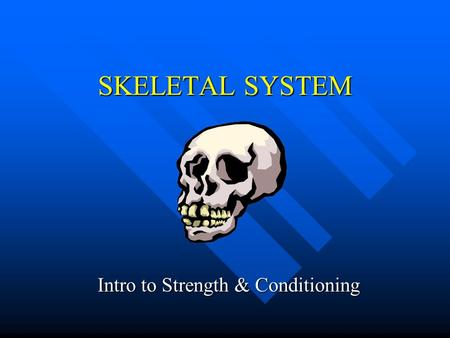 SKELETAL SYSTEM Intro to Strength & Conditioning.