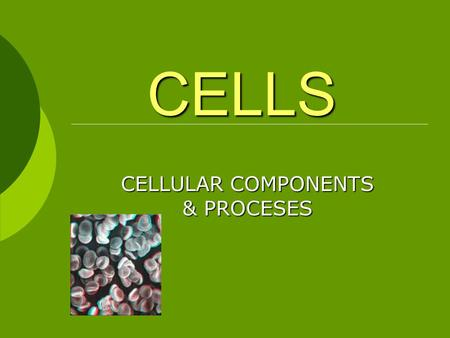 CELLS CELLULAR COMPONENTS & PROCESES. MODERN CELL THEORY 1. The cell is the unit of structure and function in living things. 2. All cells arise from preexisting.