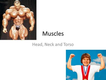 Muscles Head, Neck and Torso.
