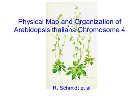 Physical Map and Organization of Arabidopsis thaliana Chromosome 4 R. Schmidt et al.