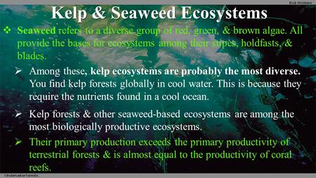 Kelp & Seaweed Ecosystems  Seaweed refers to a diverse group of red, green, & brown algae. All provide the bases for ecosystems among their stipes, holdfasts,