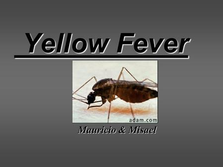 Yellow Fever Yellow Fever Mauricio & Misael. Purpose of Presentation To Define Yellow Fever Look at causes and incidence Tests Prevention Treatments Expectations.