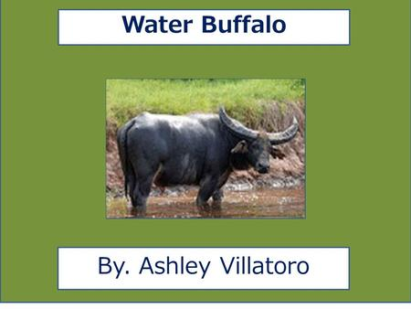 Water Buffalo By. Ashley Villatoro. aaa Animal Facts Description Water Buffaloes are in many different colors such as tan, brown, and grey. Water Buffaloes.