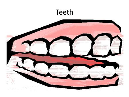 Teeth. Tooth Decay Cleaning your teeth Bacteria feed on food left on your teeth and make acid which corrode the teeth.