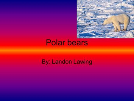 Polar bears By: Landon Lawing. About Polar bears Polar bears are extremely dangerous animals that live in the Arctic. They may look cute when their baby's.