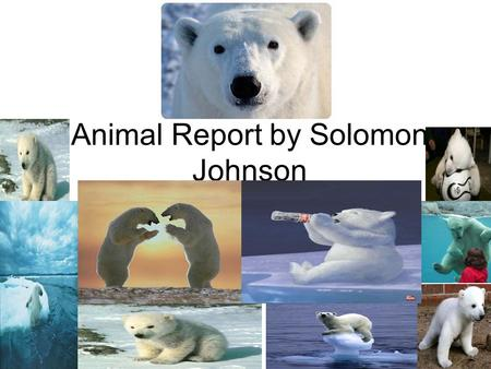 Animal Report by Solomon Johnson