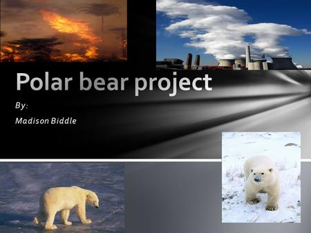 By: Madison Biddle. We can turn off all of the lights when you leave the room or go to sleep. Polar Bears are going extinct because who live in the arctic.