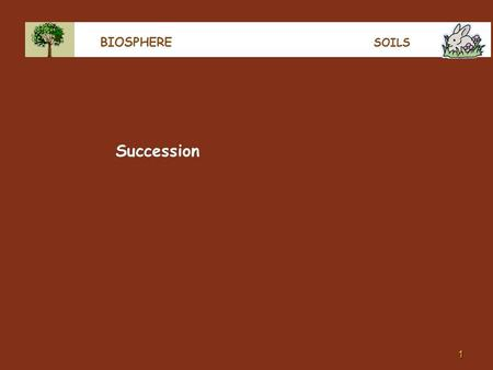 1 BIOSPHERE SOILS Succession. 2 BIOSPHERE SUCCESSION In a plant-free environment, like after a landslide, eruption, tsunami or on a beach or an industrial.