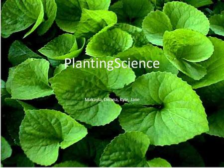 PlantingScience Makayla, Divana, Kyle, Jane. Question Which kind of liquid; water, tea, salt water, and sugar water, will have the most impact on the.
