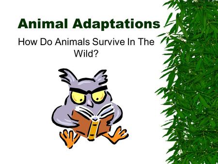 Animal Adaptations How Do Animals Survive In The Wild?