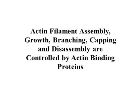 Controlled by Actin Binding Proteins