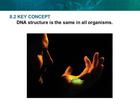8.2 KEY CONCEPT DNA structure is the same in all organisms.
