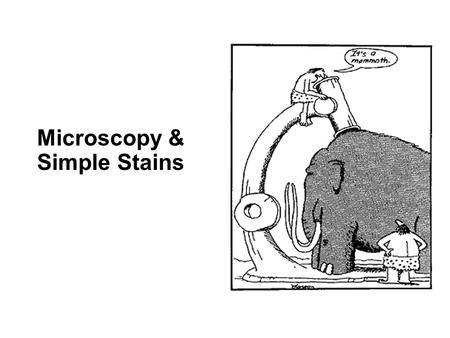 Microscopy & Simple Stains. Your Light Microscope TAKE CARE OF YOUR SCOPE: Your responsibility to take care of your scope and learn to use it properly.