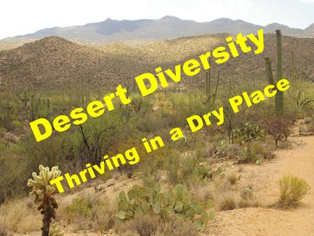 Desert Diversity Thriving in a Dry Place.