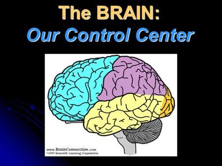 The BRAIN: Our Control Center. Optic nerve Optic tract Lateral geniculate nucleus Optic radiation Optic chiasm Primary visual cortex.