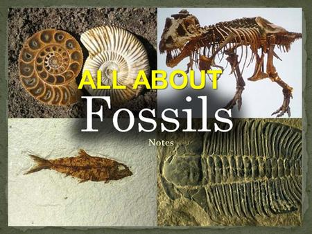 Notes. Fossils are perserved remains or traces of living things. Fossils normally form in sedimentary rock. Hard parts are the only parts of an organism.