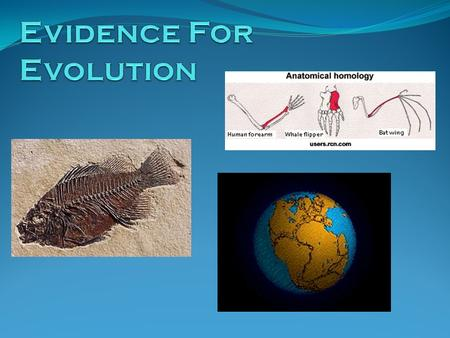 Evidence Fossil Record Anatomical Homology Developmental Homology Molecular Homology Biogeography.