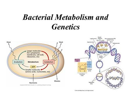 Bacterial Metabolism and Genetics. Metabolism Bacterial Metabolism Metabolism: All the chemical reactions (metabolic reactions) that occur within any.