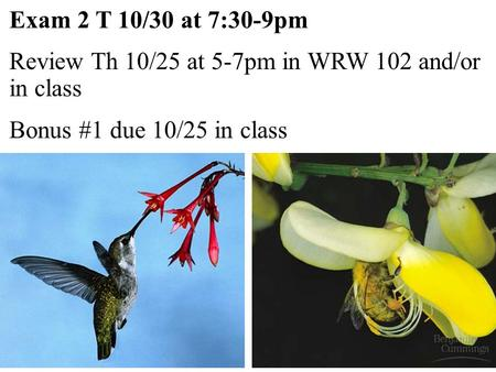 Exam 2 T 10/30 at 7:30-9pm Review Th 10/25 at 5-7pm in WRW 102 and/or in class Bonus #1 due 10/25 in class.