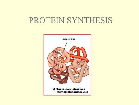 PROTEIN SYNTHESIS. CENTRAL DOGMA OF MOLECULAR BIOLOGY: DNA is used as the blueprint to direct the production of certain proteins.
