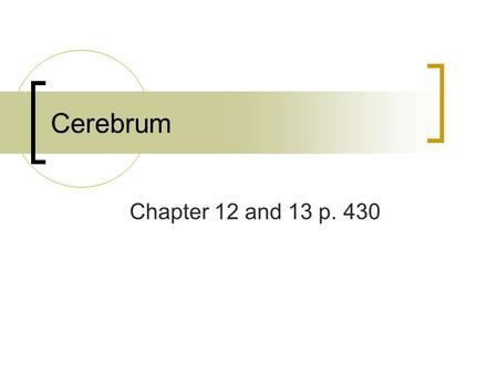 Cerebrum Chapter 12 and 13 p. 430. Cerebrum – surrounded by a thin layer of gray matter called cerebral cortex (rind or bark)  Consists of six layers.