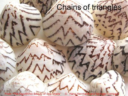 "Chains of triangles From ""The Algorithmic Beauty of Sea Shells"" © Hans Meinhardt and Springer Company."