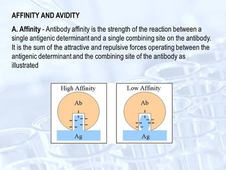 AFFINITY AND AVIDITY A. Affinity - Antibody affinity is the strength of the reaction between a single antigenic determinant and a single combining site.