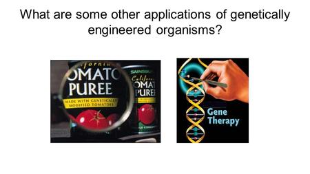 What are some other applications of genetically engineered organisms?