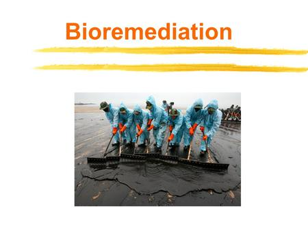 Bioremediation. Biotechnology and the Environment  Environment – describes everything that surrounds a particular organism Other organisms Soil, air,