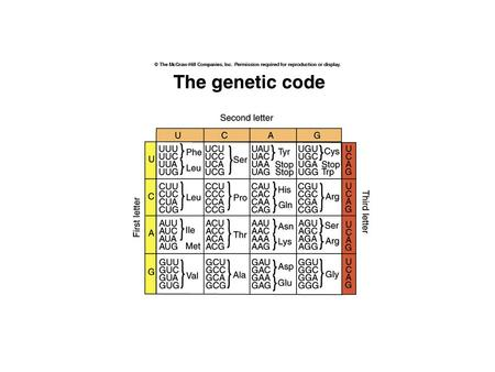 Features of the genetic code: Triplet codons (total 64 codons) Nonoverlapping Three stop or nonsense codons UAA (ocher), UAG (amber) and UGA (opal)