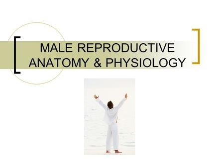 MALE REPRODUCTIVE ANATOMY & PHYSIOLOGY. SIGNS OF PUBERTY (Male) Voice Deepens Shoulders Broaden Sex drive increases Body hair develops.