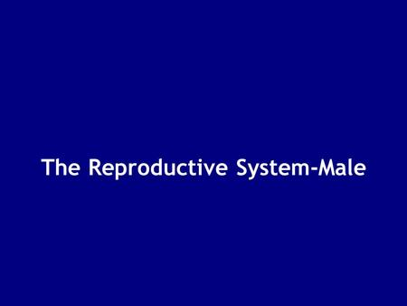 The Reproductive System-Male. Male & Female Reproductive Systems Are functionally different Female produces 1 gamete per month: –retains and nurtures.