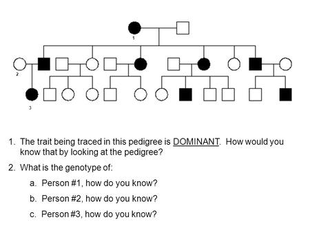 1.The trait being traced in this pedigree is DOMINANT. How would you know that by looking at the pedigree? 2.What is the genotype of: a. Person #1, how.