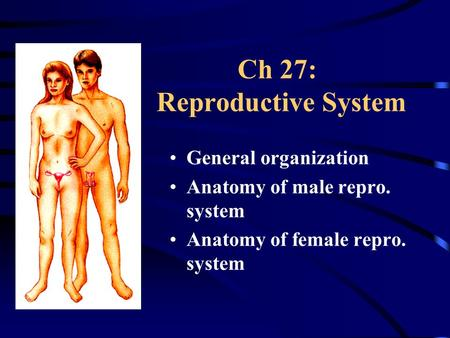 Ch 27: Reproductive System General organization Anatomy of male repro. system Anatomy of female repro. system.