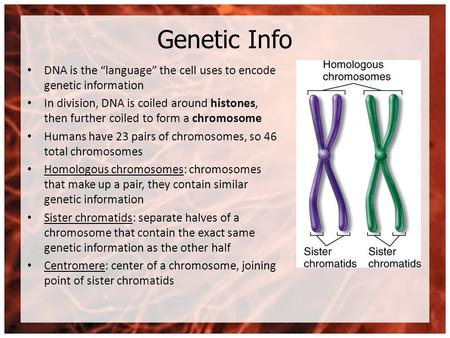 "Genetic Info DNA is the ""language"" the cell uses to encode genetic information In division, DNA is coiled around histones, then further coiled to form."