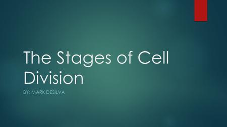 The Stages of Cell Division BY: MARK DESILVA. Prophase/ Pro Metaphase Anaphase Telophase The Stages of Mitosis.