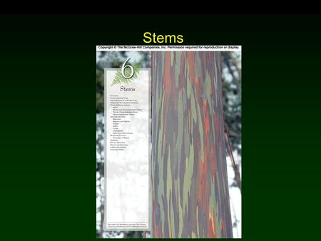 Stems. Outline External Form of a Woody Twig Stem Origin and Development Stem Tissue Patterns Herbaceous Dicotyledonous Stems Woody Dicotyledonous Stems.