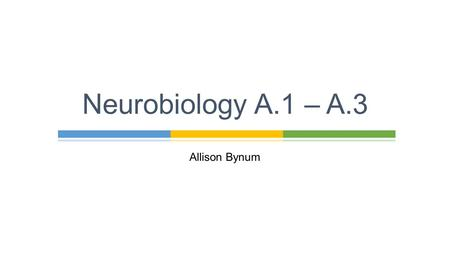 Allison Bynum Neurobiology A.1 – A.3. Allison Bynum A.1 Neural Development.