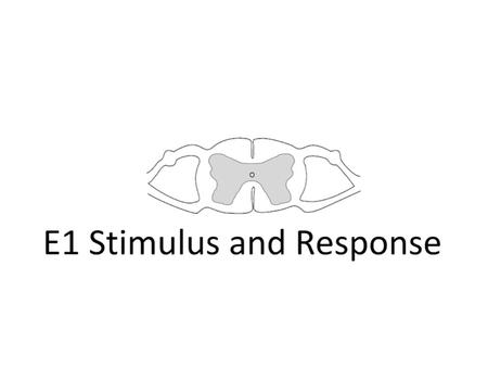 sensory reception stimulus and response Sensory reception lo: understand why we respond to stimuli and the different responses  stimulus and response a stimulus is a detectable change in the.
