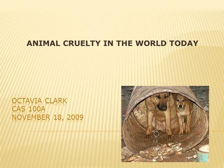 ANIMAL CRUELTY IN THE WORLD TODAY.  I HAVE A PET AND I RECENTLY DID RESEARCH ON ANIMAL CRUELTY FOR A SPEECH. 