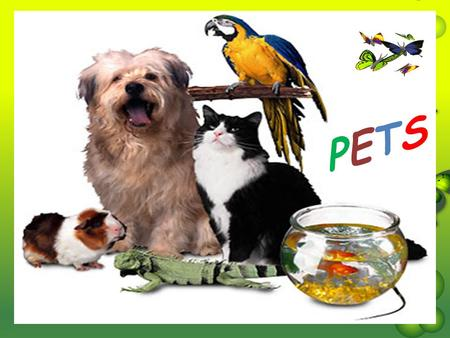 PETSPETS. WHAT DOES PET MEAN?  A pet is a domestic ANIMAL Do you have a pet? How many pets can you name?