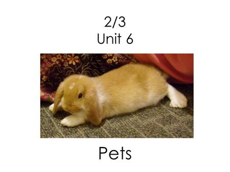 2/3 Unit 6 Pets. What is the hamster like? The hamster is small and soft.