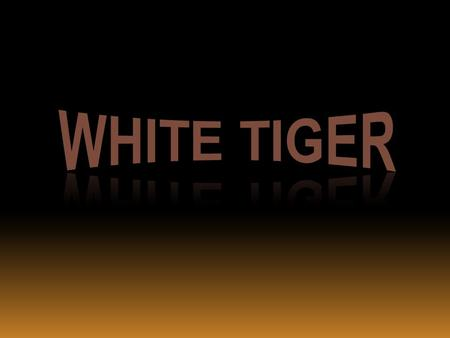  The White Tiger is a subspecies of Tiger. It lives in North and Central India, Nepal and Burma.  White tigers are rarely seen in the wild, and only.