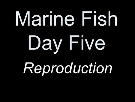 Marine Fish Day Five Reproduction. Sexes are usually separate with paired gonads in the body cavity.