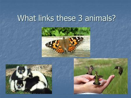 What links these 3 animals?. They all pollinate plants!!