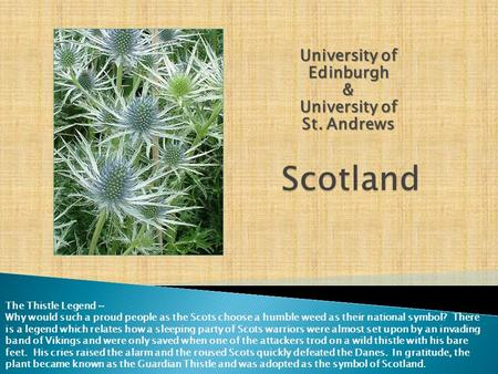 University of Edinburgh & University of St. Andrews The Thistle Legend ~ Why would such a proud people as the Scots choose a humble weed as their national.