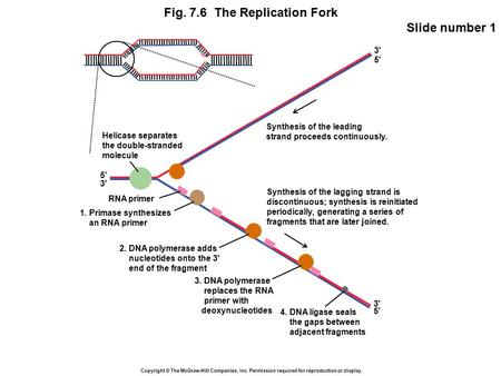 Copyright © The McGraw-Hill Companies, Inc. Permission required for reproduction or display. Fig. 7.6 The Replication Fork Slide number 1 5' 3' 5' Synthesis.