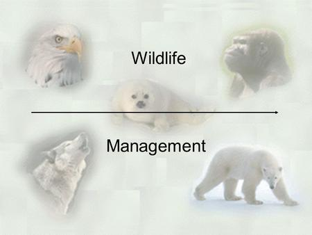 Wildlife Management. Endangerment vs. Extinction Extinct –a species that has disappeared from the Earth –due to food shortages, pollution, destruction.