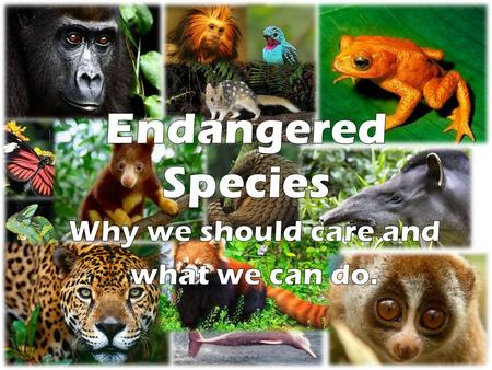 I. What is an endangered species? A.Species in immediate danger of becoming extinct 1.Population is declining 2.Not able to replenish itself through reproduction.