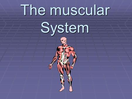 The muscular System. The muscular system is made up of… musclesandtendons.